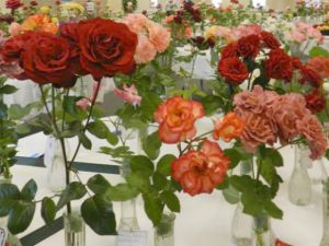 The South Metro Rose Society sponsors a rose show in May.
