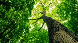 Ever heard of a tree bank? Peachtree City may get one