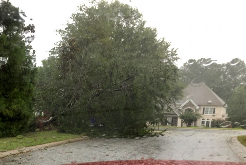 Downed tree on Glisten View in Peachtree City. Photo/David Anders.