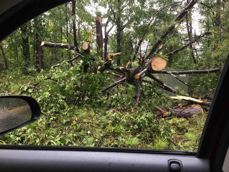 Tree down on Kedron Drive. Photo/David Anders.