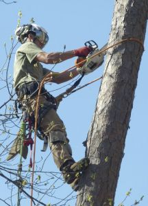 770-Tree-Guy is a full-service tree pruning, removal, and arborist services company.