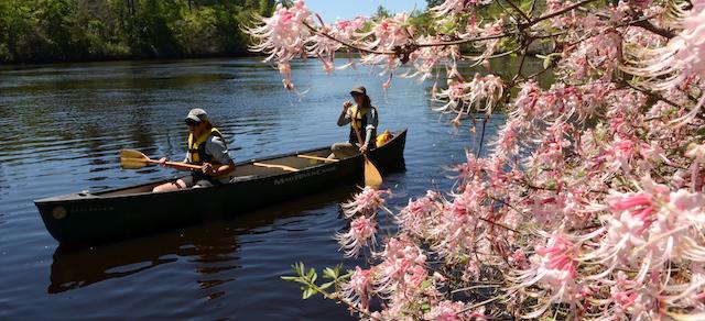 Satilla paddle adventure Apr. 1-2