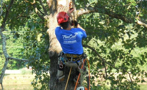 Tru Cut Tree Experts gives tips for choosing a tree service